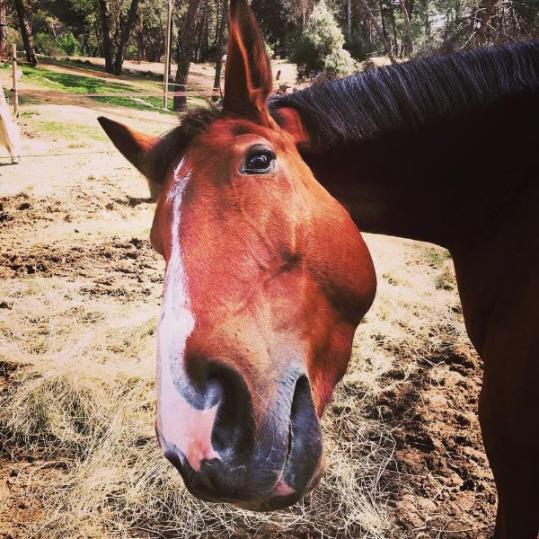 valorisation cheval